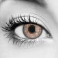 Violet Rose Contact Lenses